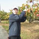 この時期が旬! 奈良県名産の富有柿を収穫レポート