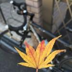 知る人ぞ知る奈良の紅葉の名所へ!【フクタンxロードバイク】